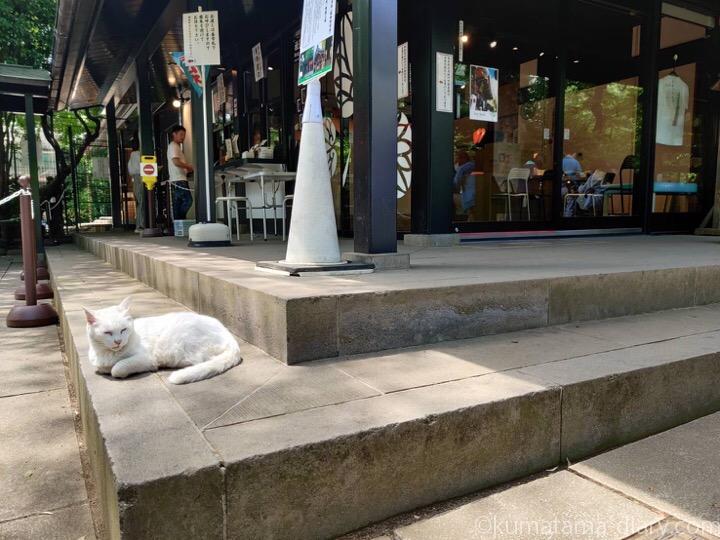 愛宕神社の白猫さん