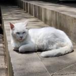 愛宕神社の猫さんたち