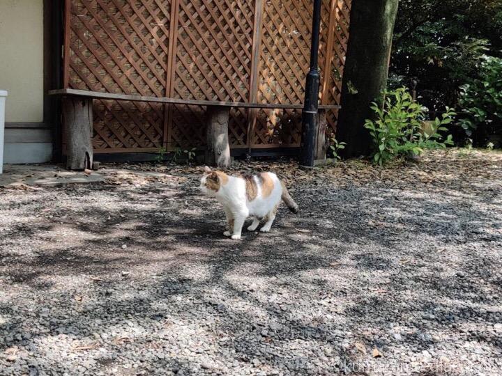 愛宕神社の三毛猫さん