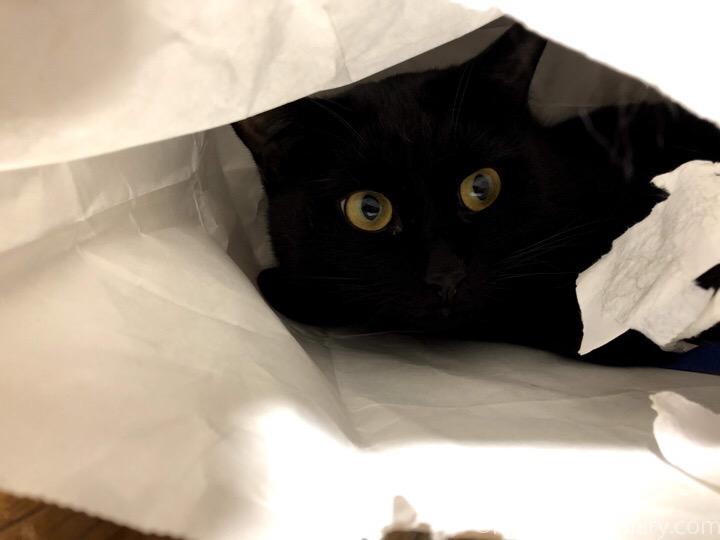 紙袋の中のふみお