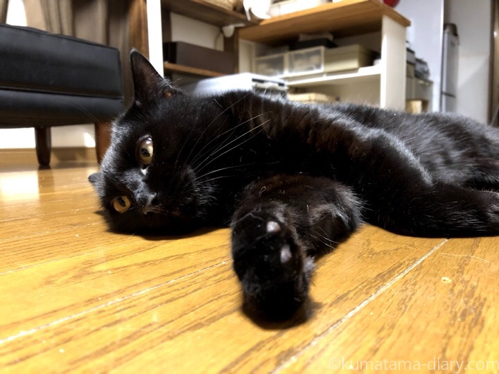 床で寝そべるふみお
