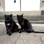 【文京区】「白山神社」のあじさいとスリスリしてくれなくなった黒猫さんたち
