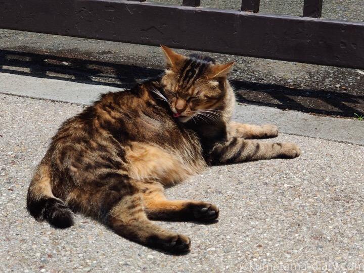 植物園の猫さん