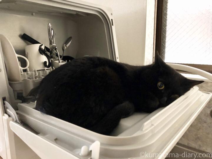 食洗機の扉で寝るふみお
