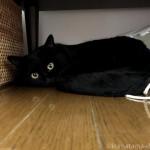 テレビ台の下で眠る猫