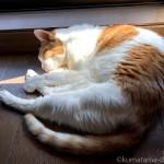 窓際で眠る猫とハンモックで寝る猫