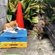 茶トラ白猫さんとキジトラ猫さん