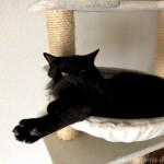 肉球の間の毛が長い猫