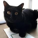郵便物に乗る猫