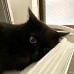 Panasonicの食洗機「プチ食洗」の扉で寝る猫