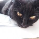 「洗たくマグちゃん」の上で寝そべる猫