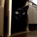 段ボールに入るのが好きな猫たち