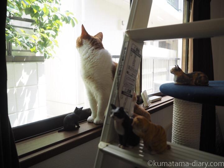 たまきと木彫り猫たち