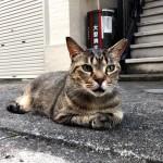 香箱座りかと思ったら違った近所のキジトラ猫さん