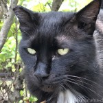【文京区】近くに来てくれた「白山神社」の黒猫さんたち