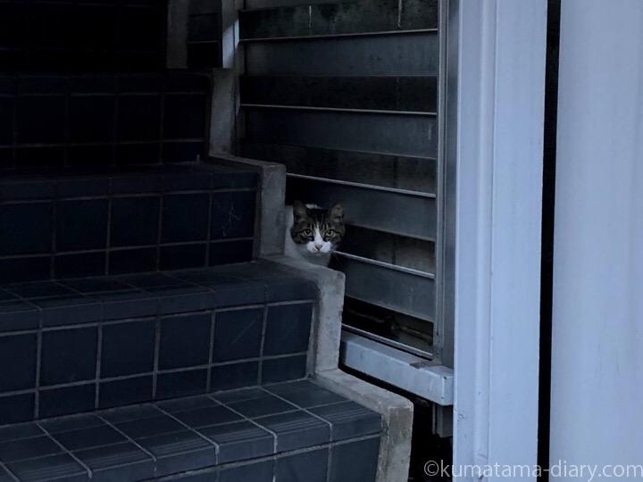 ビルの猫さん