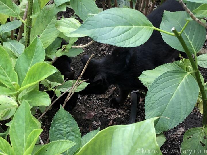 神社の猫さんたち
