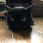 カウンターの上でエサを食べるようになった猫
