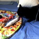 Atelier168のサカナの形のおもちゃで遊ぶ黒猫
