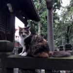 【文京区】稲荷神社にいた三毛猫さん