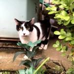 木彫り猫のモデルにぴったりな黒白猫さんとキジトラ猫さん