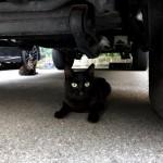 ランクルの下の猫さんたち