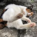 【文京区】ピンクの肉球がかわいい三毛猫さん