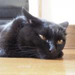 【月命日】クーラーと黒猫