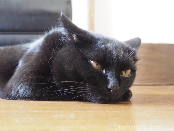 床に寝そべるふみお