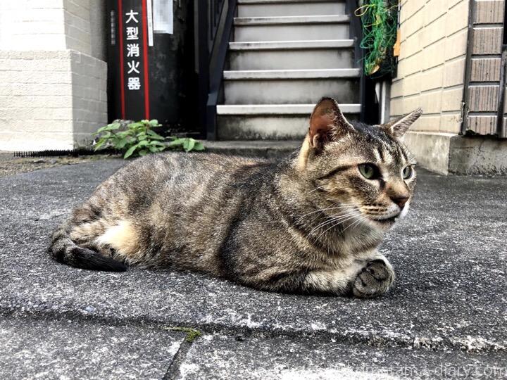 前足を合わせるキジトラ猫さん