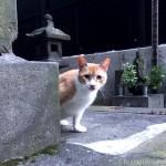【文京区】警戒心が強い茶トラ白猫さん