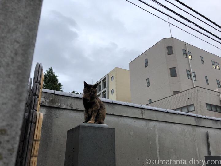 お墓の上のサビ猫さん