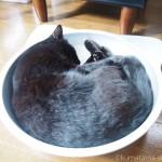 「黒猫感謝の日」とひんやりクール猫鍋