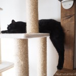 キャットタワーで後ろ足が落ちたまま寝そべる黒猫