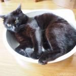 お腹にハゲができた黒猫