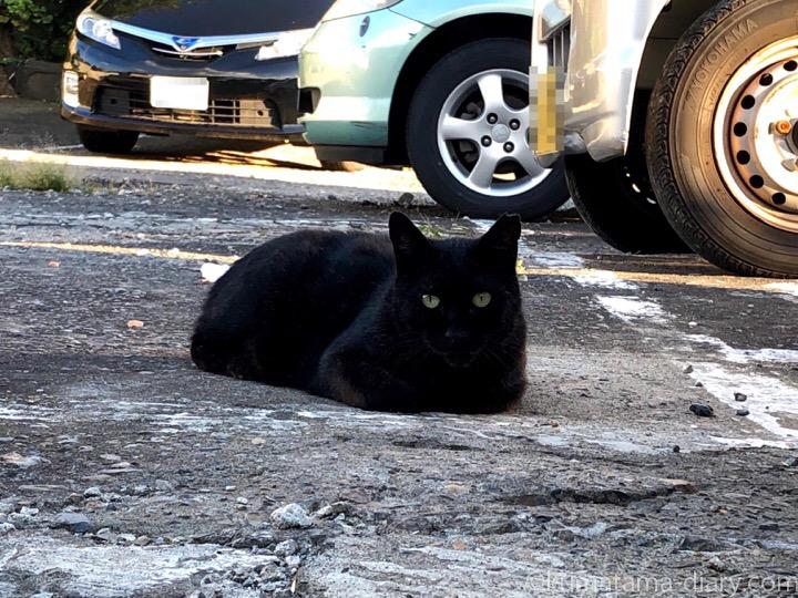 香箱座り黒猫さん