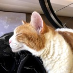 ビンディングシューズにあごのせする猫