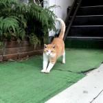 「世界猫の日」の青山の猫さんたち