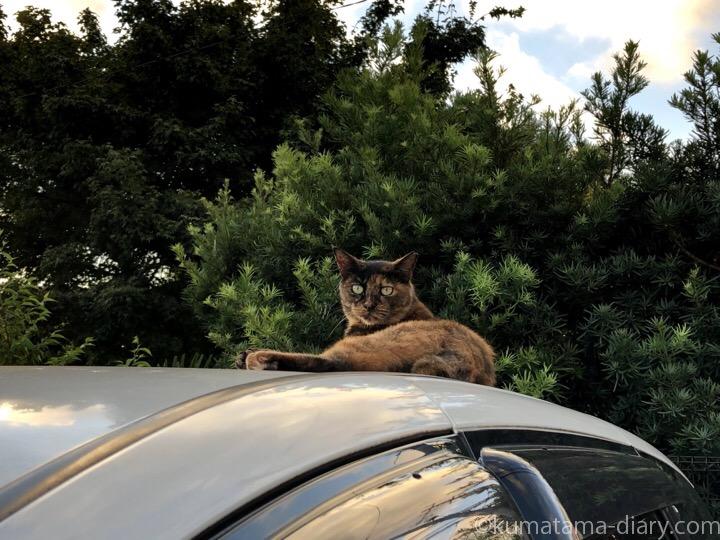 車の上のサビ猫さん