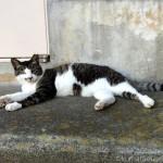 ピクピクする前足も可愛いキジトラ白猫さん