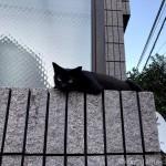 塀の上で寝そべる黒猫さん