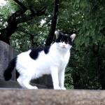 パーマンやバッドマンみたいな個性的な柄の白黒猫さん
