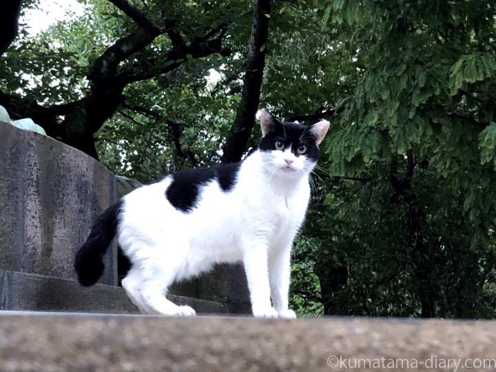 パーマン白黒猫さん