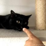キャットタワーで彼の指をにおう猫