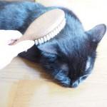 【月命日】ブラシを見るとやってくる猫