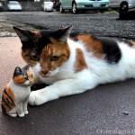 駐車場の親密な三毛猫さんと黒猫さん