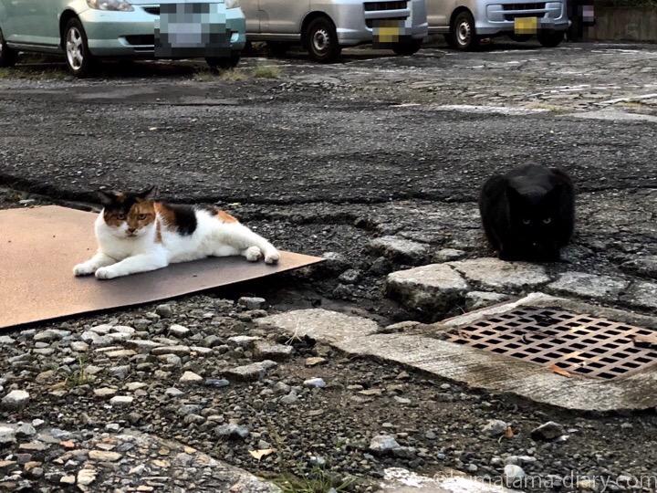 三毛猫さんと黒猫さん