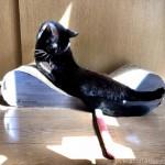 「ガリガリソファスクラッチャー」で爪とぎ&毛づくろいする黒猫