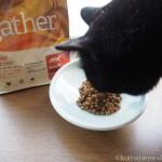 「ギャザー フリーエーカー キャット」が大好きな猫たち