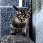アビシニアンっぽい柄の猫さん